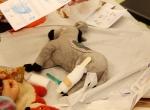 IMG_3939teddykrankenhaus_marienhospital