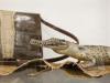beschlagnahmte Schmuggelware im Zollmuseum Friedrichs © BF