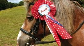 DIY für Haustiere: Siegerschleife für Ponys