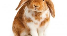 Welches Haustier? Ein Kaninchen zu Ostern?